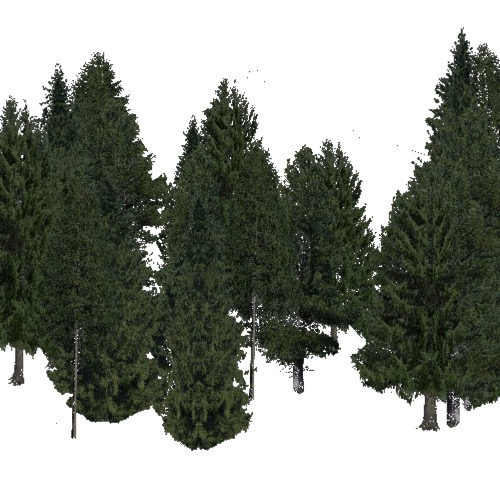 Screenshot of Conifer dense, cold and temperate