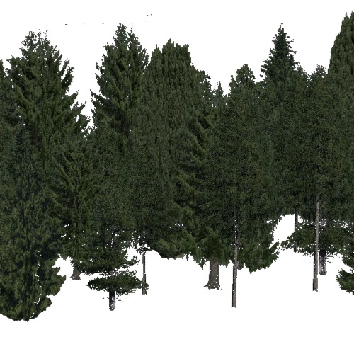 Screenshot of Conifer dense, hot, rain