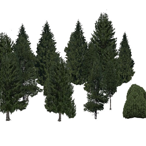 Screenshot of Conifer dense, very cold, dry