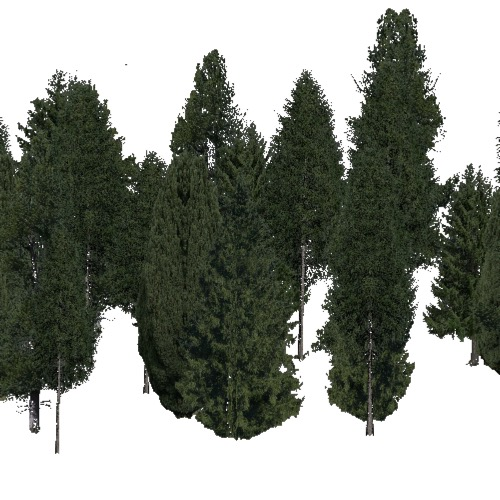 Screenshot of Conifer dense, warm, rain