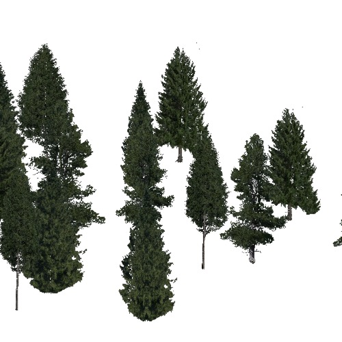 Screenshot of Conifer sparse, cold and temperate