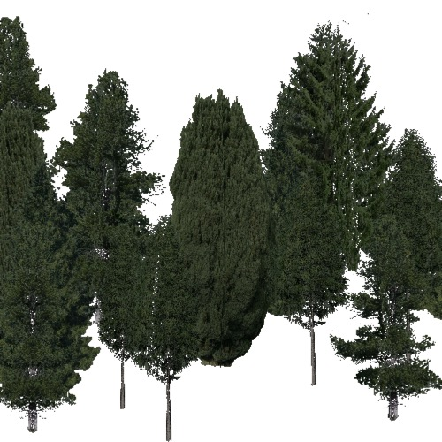 Screenshot of Conifer sparse, hot, wet