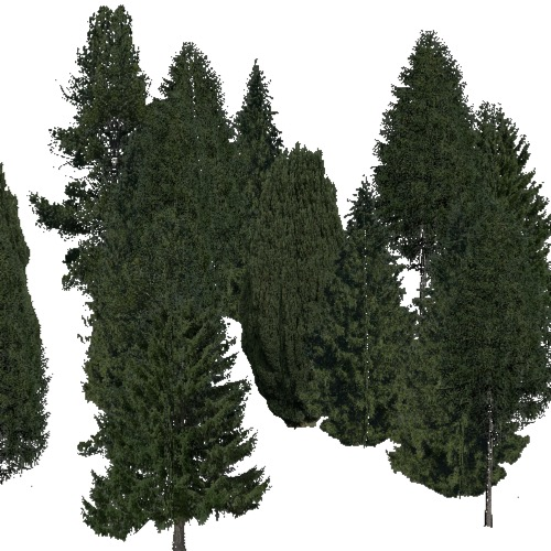 Screenshot of Conifer sparse, warm, dry and semi-dry