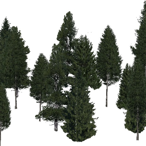 Screenshot of Conifer sparse, warm, rain