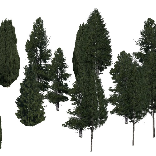 Screenshot of Conifer sparse, warm, wet