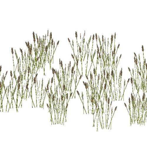 Screenshot of Grass, cats tails, 0.3-0.4m