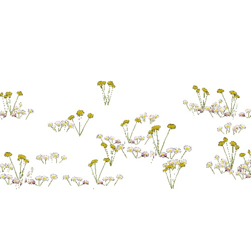 Screenshot of Asteraceae (daisies and dandelions), 0.2-0.6m