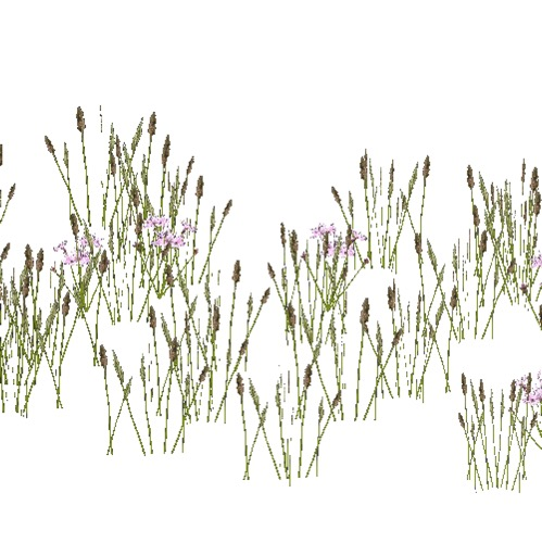 Screenshot of Asteraceae and grass, 0.4-0.6m