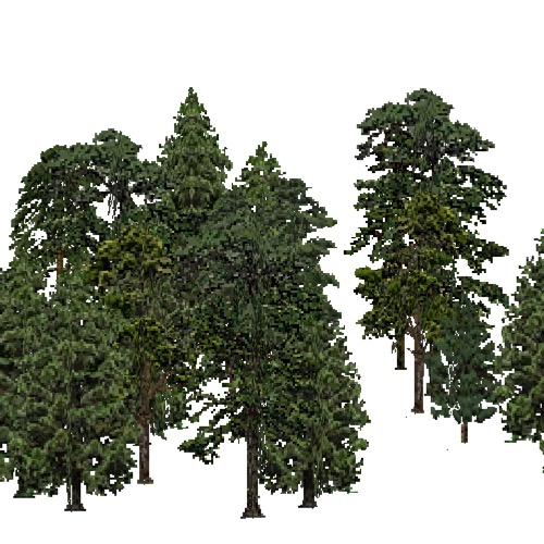 Screenshot of European Forest, Macaronesia, Conifer