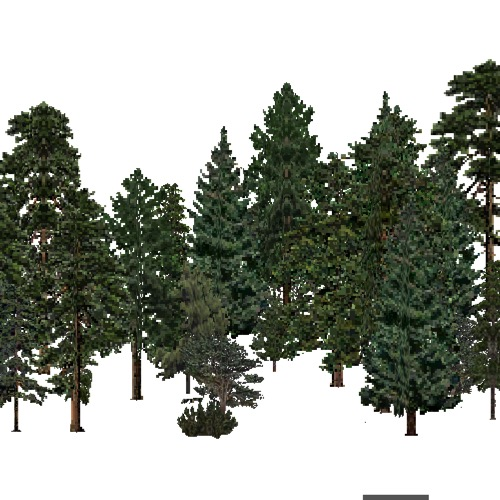 Screenshot of USA Forest, Arizona New Mexico, Evergreen Dense