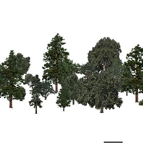 Screenshot of USA Forest, Arizona New Mexico, Mixed Dense