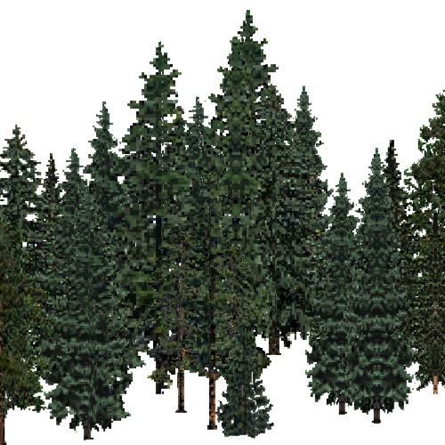 Screenshot of USA Forest, Black Hills, Evergreen Dense