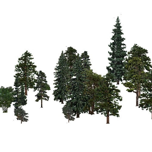 Screenshot of USA Forest, Black Hills, Evergreen Sparse