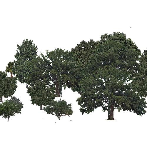 » USA Forest, California Coastal Chapparra, Deciduous Dense