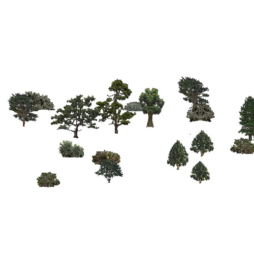 Screenshot of USA Forest, California Coastal Range, Evergreen Sparse