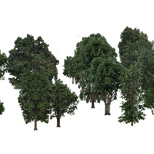 Screenshot of USA Forest, California Coastal Redwood, Deciduous Dense