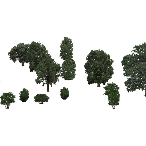 Screenshot of USA Forest, California Coastal Redwood, Deciduous Sparse