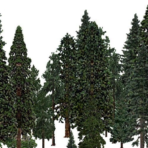 Screenshot of USA Forest, California Coastal Redwood, Evergreen Dense