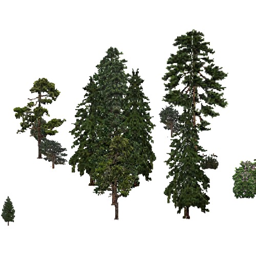 Screenshot of USA Forest, California Coastal Redwood, Evergreen Sparse