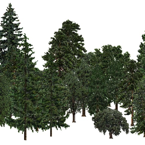 Screenshot of USA Forest, California Coastal Redwood, Mixed Dense