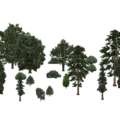 Screenshot of USA Forest, California Coastal Redwood, Mixed Sparse