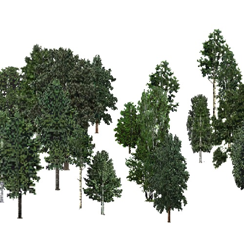 Screenshot of USA Forest, Cascade, Deciduous Dense