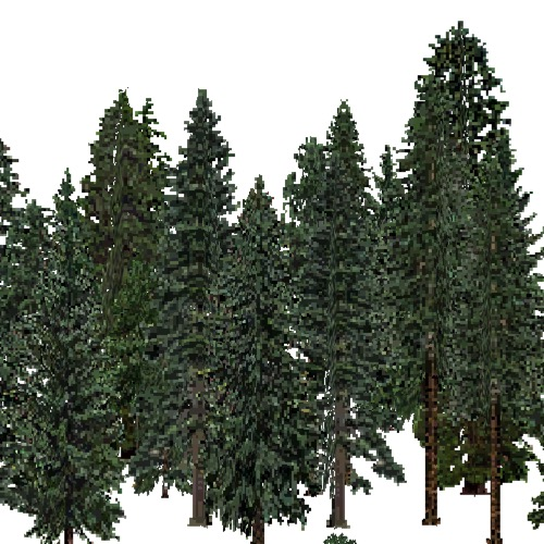 Screenshot of USA Forest, Cascade, Evergreen Dense