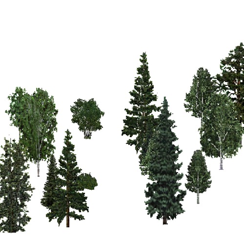 Screenshot of USA Forest, Cascade, Mixed Sparse