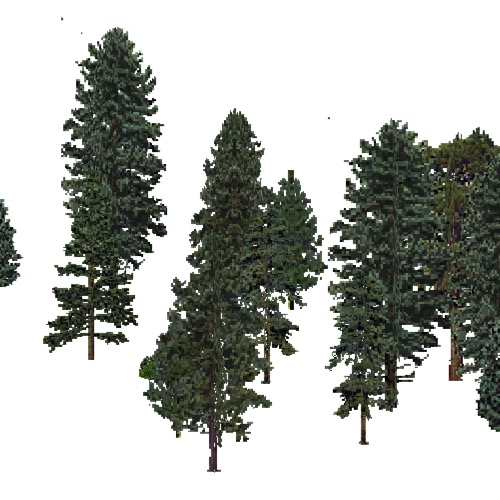Screenshot of USA Forest, Eastern Oceanic, Evergreen Sparse