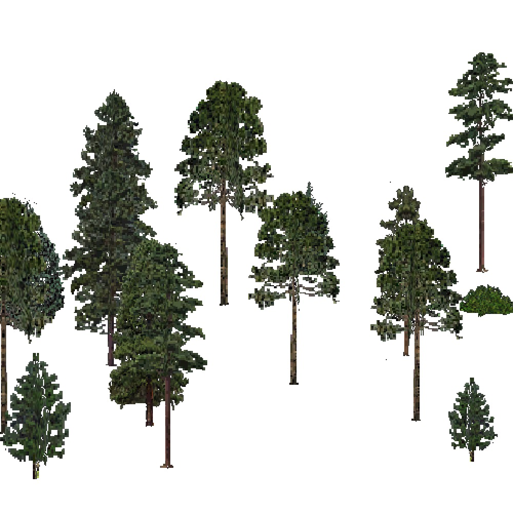 Screenshot of USA Forest, Outer Coastal Plain, Evergreen Sparse