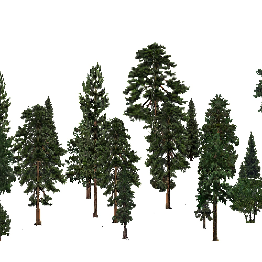 Screenshot of USA Forest, Pacific Lowland, Evergreen Sparse