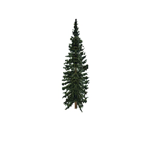 Screenshot of Tree, Abies (Fir), 11m