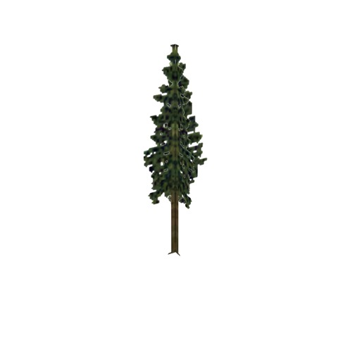 Screenshot of Tree, Abies (Fir), 12m