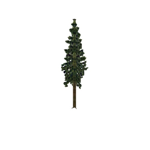 Screenshot of Tree, Abies (Fir), 28m