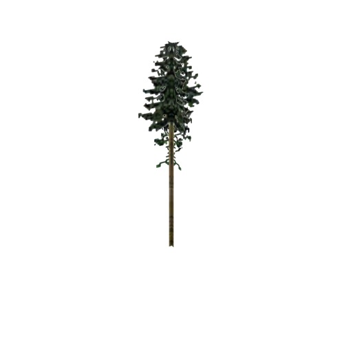 Screenshot of Tree, Abies (Fir), 31m
