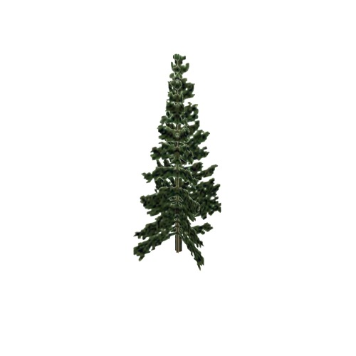 Screenshot of Tree, Abies (Fir), 25m