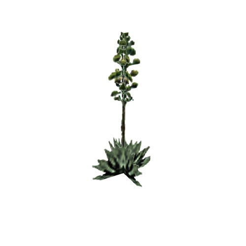 Screenshot of Succulent, Agave, flowering, 6m