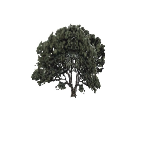 Screenshot of Tree, Arctostaphylos (Manzanita), 4.5m