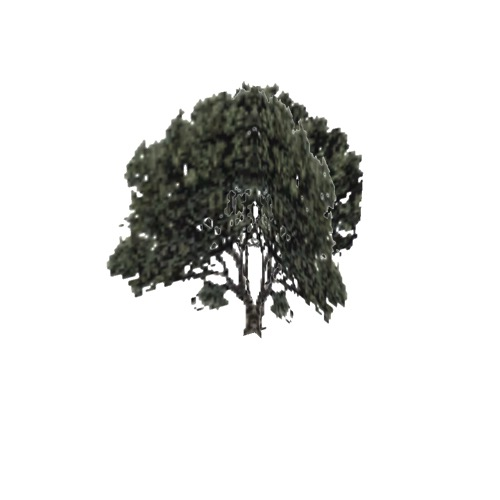 Screenshot of Tree, Arctostaphylos (Manzanita), 5m