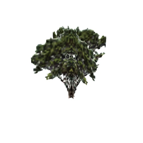 Screenshot of Tree, Arctostaphylos (Manzanita), 3.5m