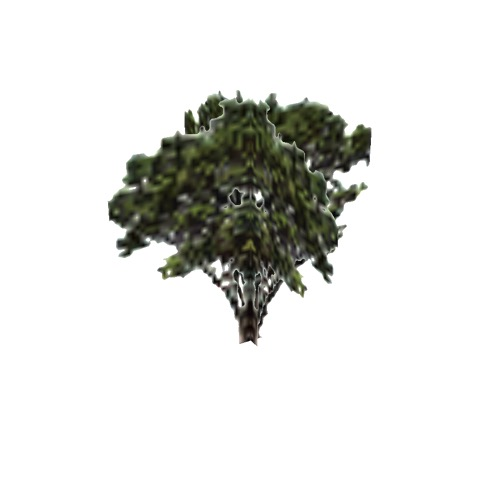 Screenshot of Tree, Arctostaphylos (Manzanita), 4m
