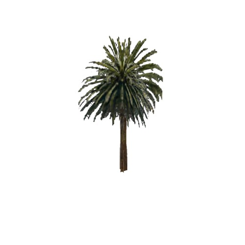 Screenshot of Tree, Arecaceae (Palm), 12m