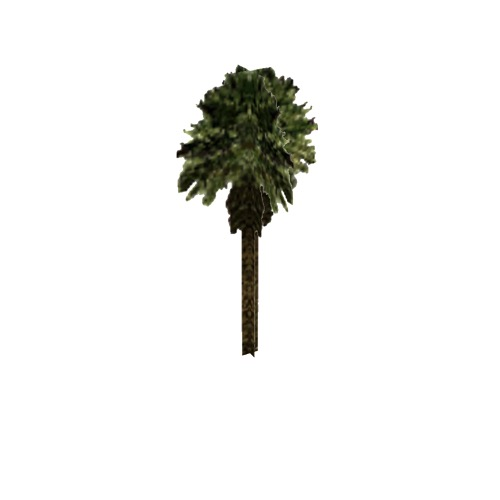 Screenshot of Tree, Arecaceae (Palm), 7.5m
