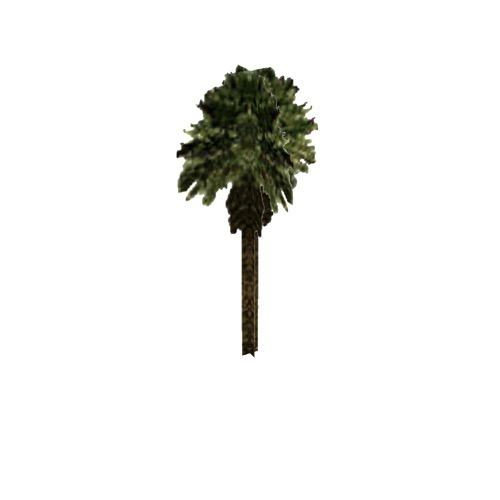 Screenshot of Tree, Arecaceae (Palm), 8.5m
