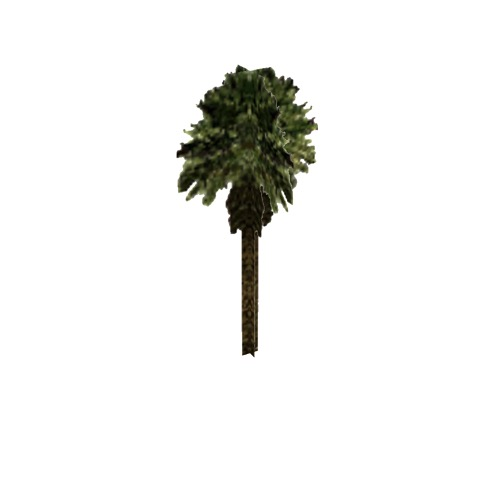 Screenshot of Tree, Arecaceae (Palm), 9.5m