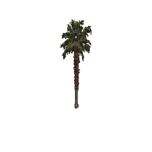 Screenshot of Tree, Arecaceae (Palm), 10m
