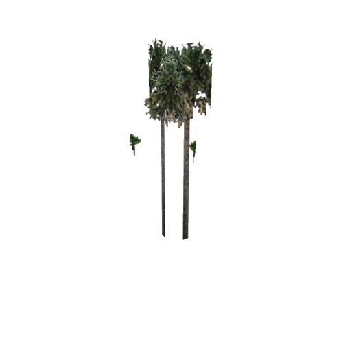 Screenshot of Tree, Arecaceae, Sabaleae (Sabal Palm), 14m