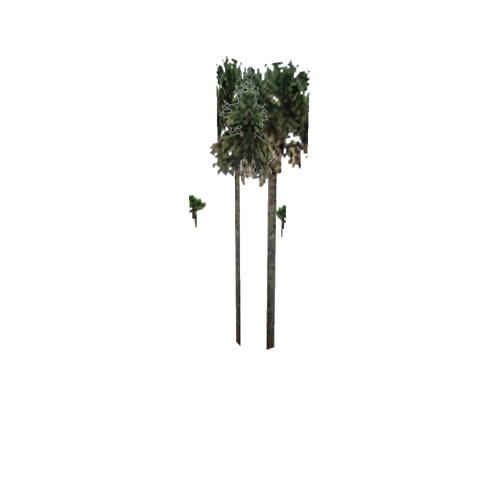 Screenshot of Tree, Arecaceae, Sabaleae (Sabal Palm), 16m
