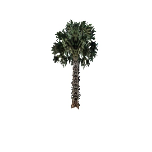 Screenshot of Tree, Arecaceae, Sabaleae (Sabal Palm), 9.5m