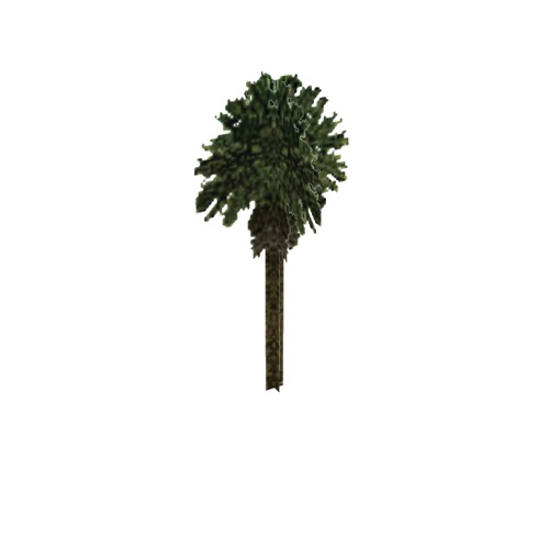 Screenshot of Tree, Arecaceae (Palm), 15m